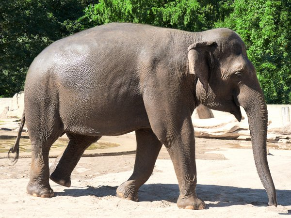 APS have provided perimeter security for Project Elephant Base Camp at Blackpool Zoo.
